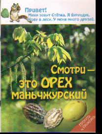 Смотри - это орех маньчжурский