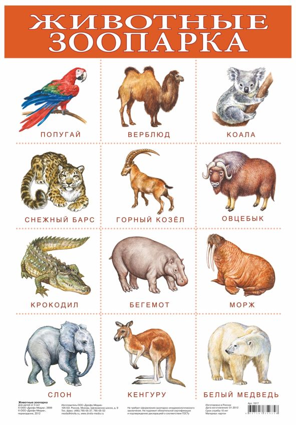 Плакат Животные зоопарка