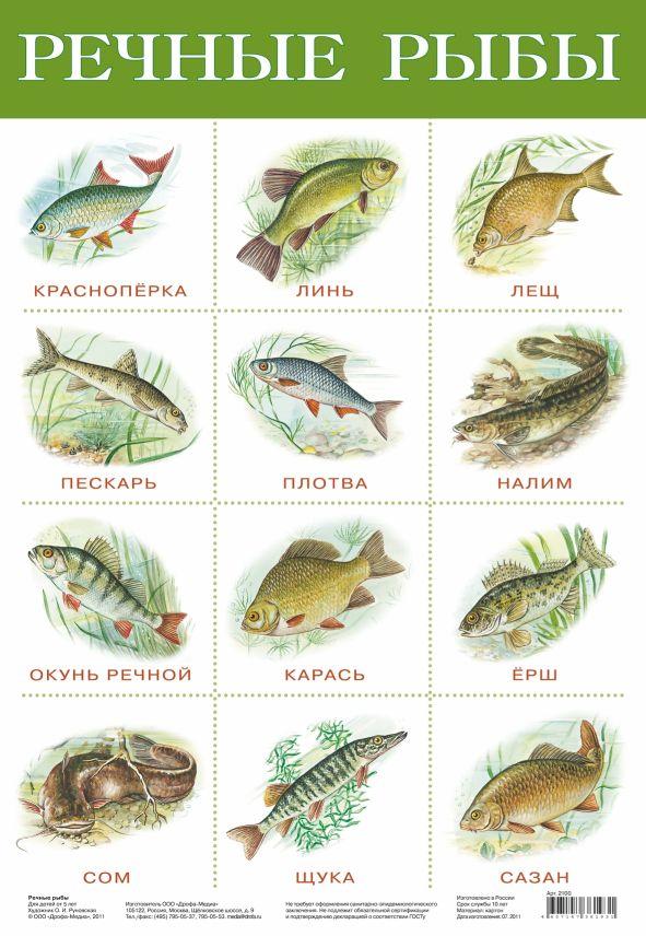 Плакат Речные рыбы
