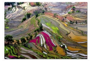 Пазл 1000 Educa 15156 Рисовые поля