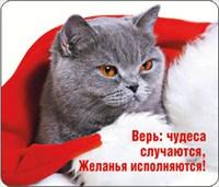 НГ Магнит 51.11.110 Верь: чудеса случаются... винил. 7х6, кот