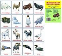 Раздаточные карточки Животные холодных широт (16 штук)