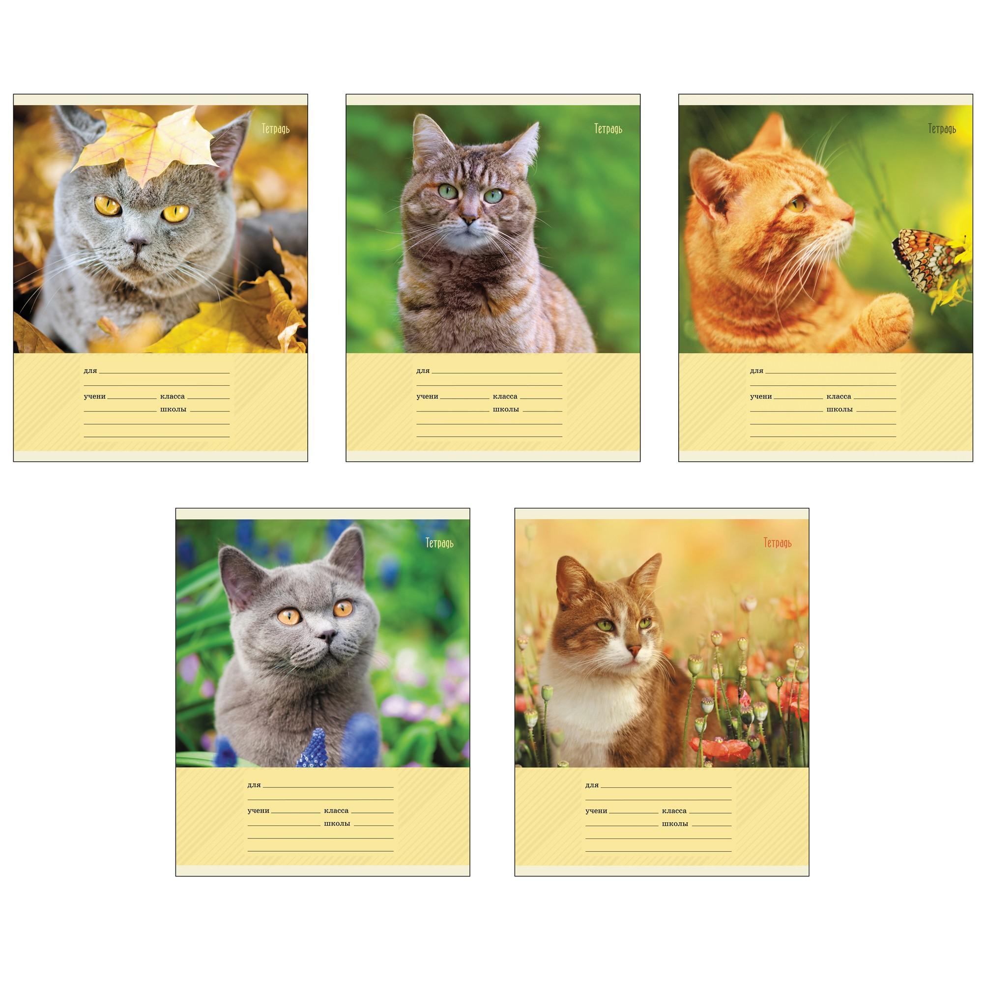 Тетрадь 12л линейка Коты на природе