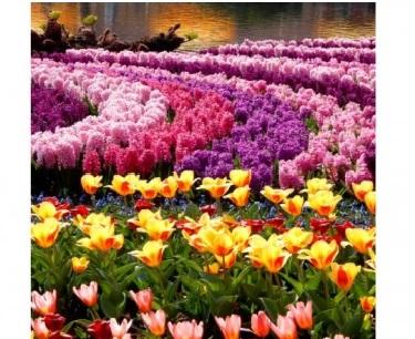 Творч Алмазная мозаика 40*50 Море цветов