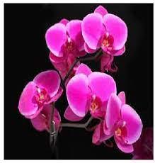Творч Алмазная мозаика 40*50 Орхидеи