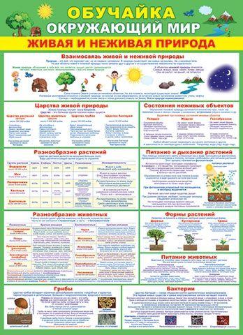 Плакат Обучайка Окружающий мир А2 ветик зеленый фон