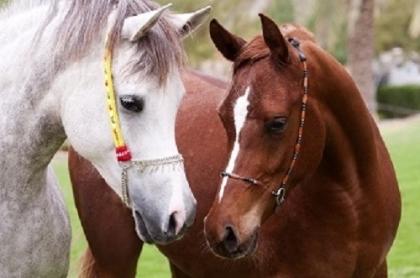 Творч Алмазная мозаика 22*32 Две лошади