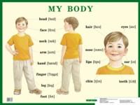 Плакат Строение тела человека. My Body: Нагляд. пособие для нач.школы.