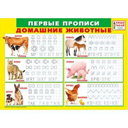 Плакат Первые прописи. Жомашние животные Пиши Стирай