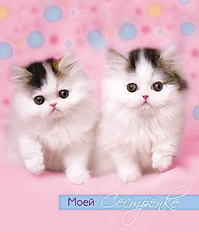 Открытка 0629.072 Моей сестренке! сред конгр лак два котенка на розовом