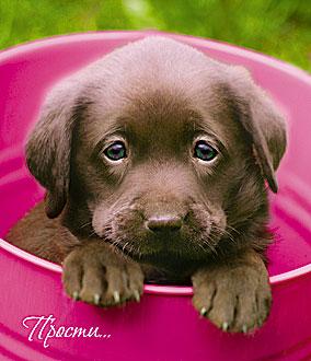 Открытка 0629.070 Прости.. сред лак коричнев щенок в розов чашке