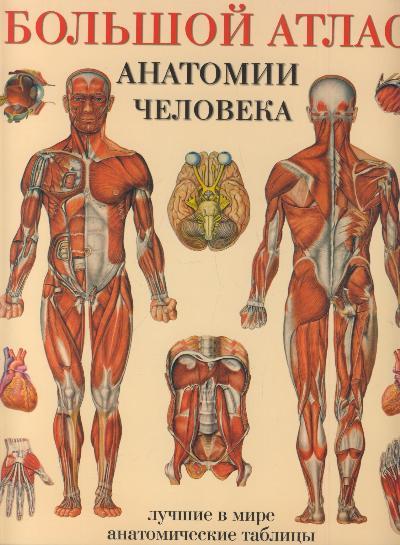 Большой атлас анатомии человека: Лучшие в мире анатомические таблицы