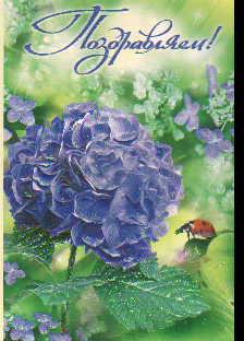 Открытка 003.535 Поздравляем! сред глитер конгр синий цветок жук