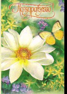 Открытка 001.263 Поздравляю! сред конгр глитер цветок бабочка