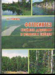 Фотосинтез хвойных деревьев в условиях Сибири