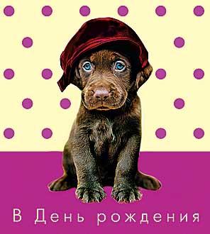 Открытка 0164.025 В День рождения! сред, лак, пес в кепке