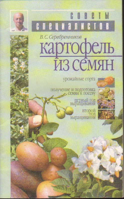 Картофель из семян