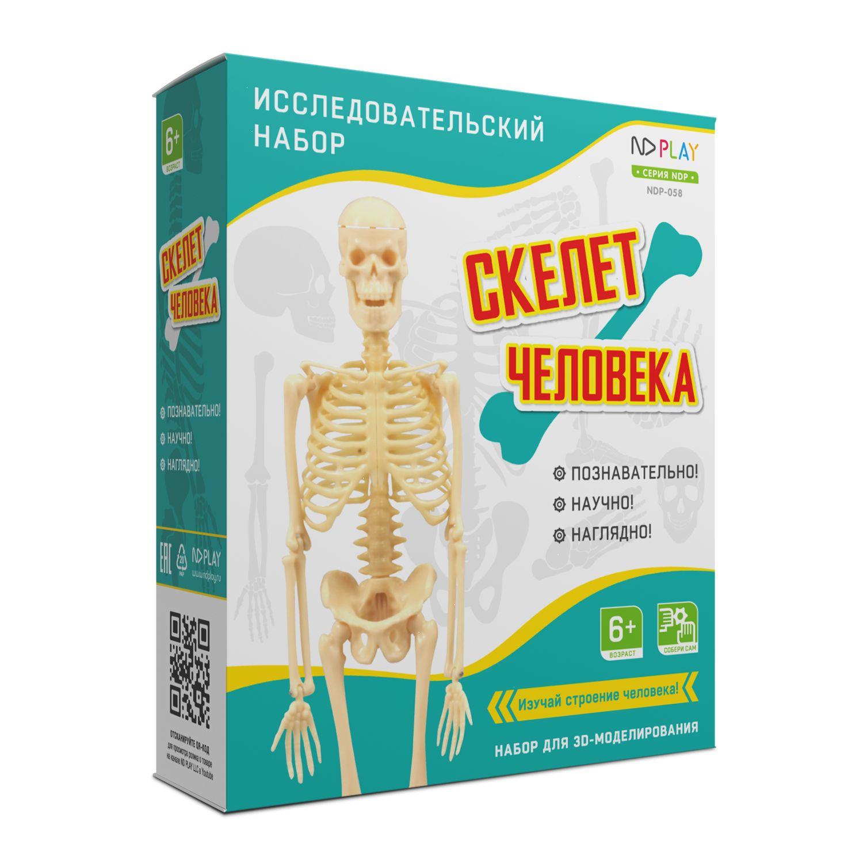 Набор для исследования Скелет человека
