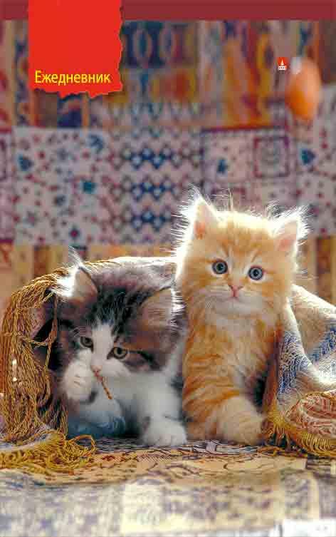 Ежедневник А5 Котята под пледом