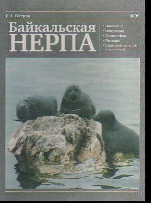 Байкальская нерпа. Все о байкальской нерпе 33% НЕ ДЕЙСТВУЕТ!
