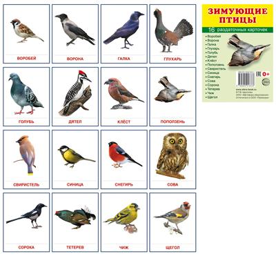 Раздаточные карточки Зимующие птицы (16 штук)
