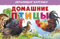 Домашние птицы: обучающие карточки