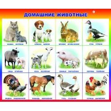 Плакат Домашние животные и птицы