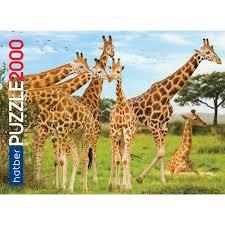 Пазл 2000 Жирафы