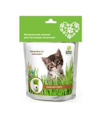 Набор для выращивания Трава для кошек