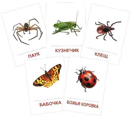 Раздаточные карточки Насекомые (16 штук)