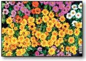 Календарь квартальный 2018 1600089 Цветы