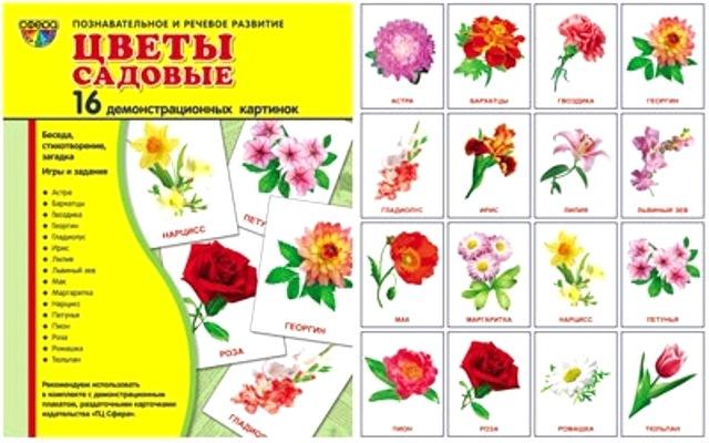 Картинки садовых цветов и их названия, картинки фоны открытки