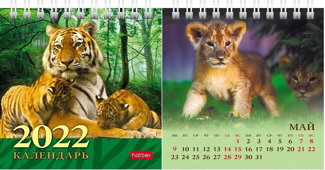 Календарь настольный 2022 (домик) 12КД6гр_24613 Дикие котята
