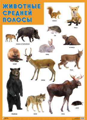 Плакат Животные средней полосы