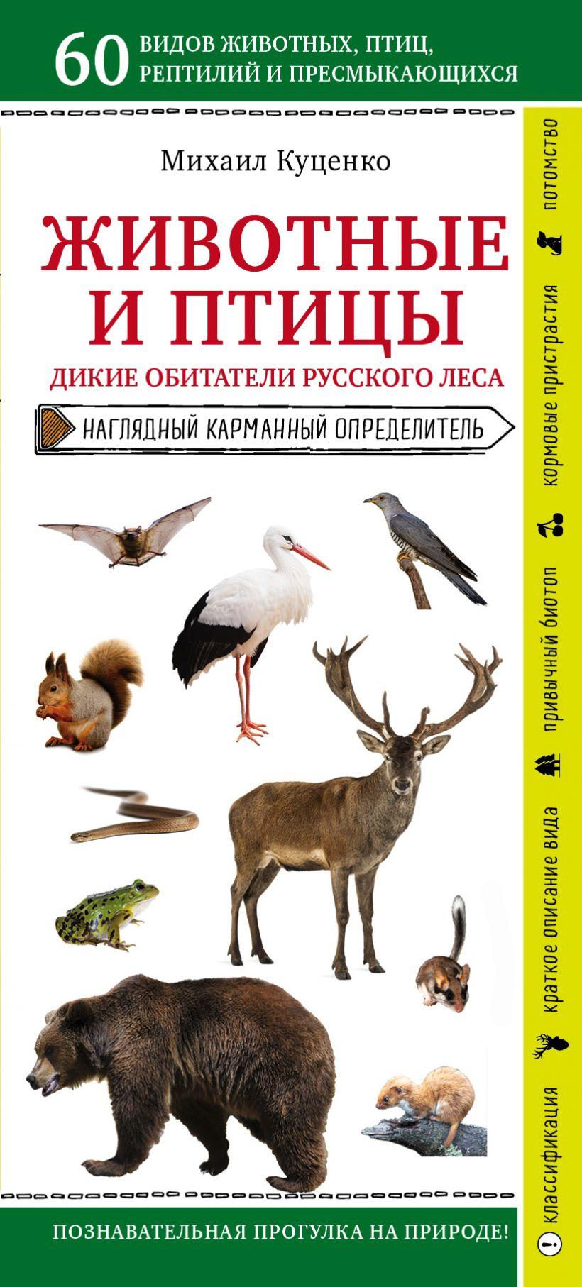 Животные и птицы. Дикие обитатели русского леса