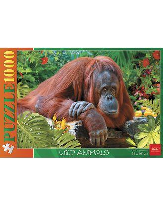 Пазл 1000 Орангутанг