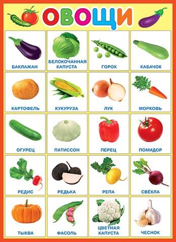 Плакат Овощи А2 вертик