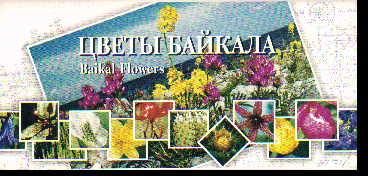 Набор открыток Цветы Байкала. Baikal Flowers
