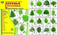 Деревья и кустарники: 16 демонстрационных картинок с текстом на обороте