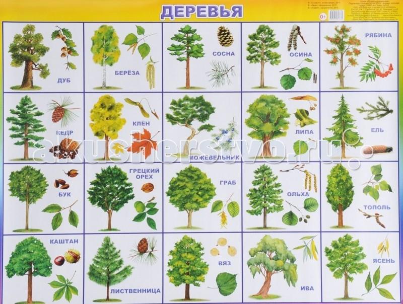 Плакат Деревья