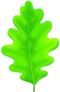 Открытка М-09569 Лист дуба зеленый мал вырубка