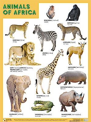 Плакат Animals of Africa (Животные Африки)