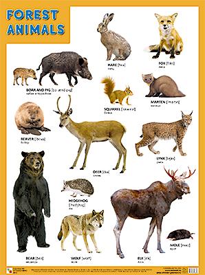 Плакат Forest Animals (Лесные обитатели)
