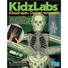 Набор для исследования Юный врач. Скелет человека