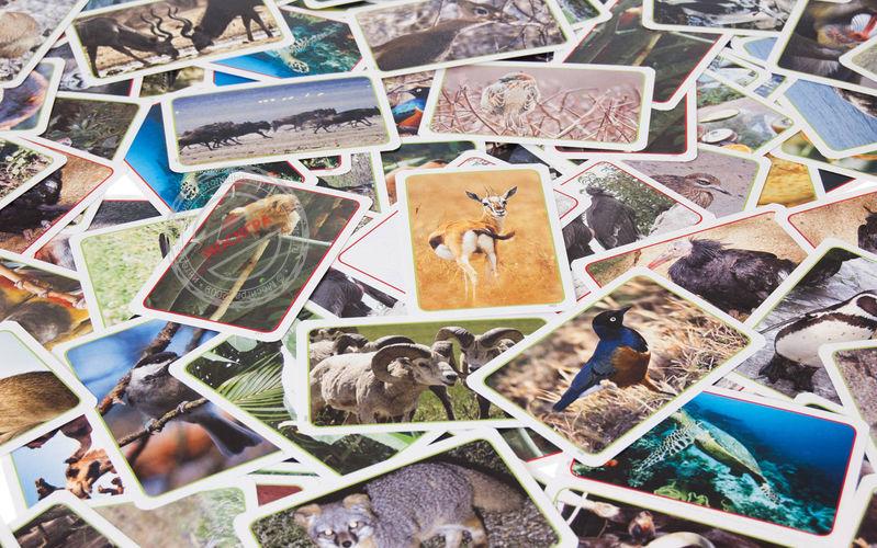 Развивающая Дикие животные (карточки)