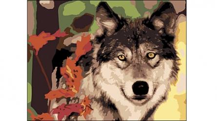 Раскраска по номерам А4 Волк