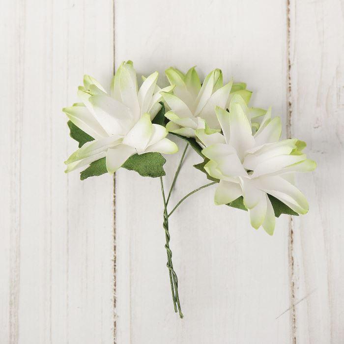 Цветы Астра с зелёным оттенком 9шт 4х4см