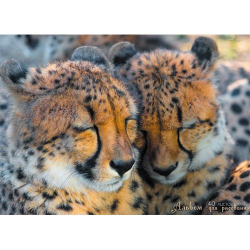 Альбом д/рис 40л спир Два гепарда 110г/м2