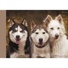 Альбом д/рис 40л Три друга (собаки) склейка