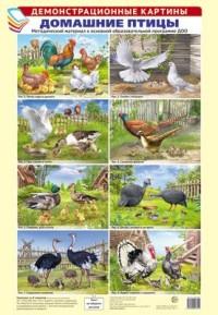 Домашние птицы. Демонстрационные картины А3 8шт. метод.м-л к ООП ДОО